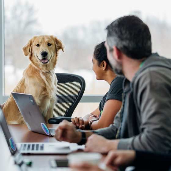 Dog at boardroom meeting